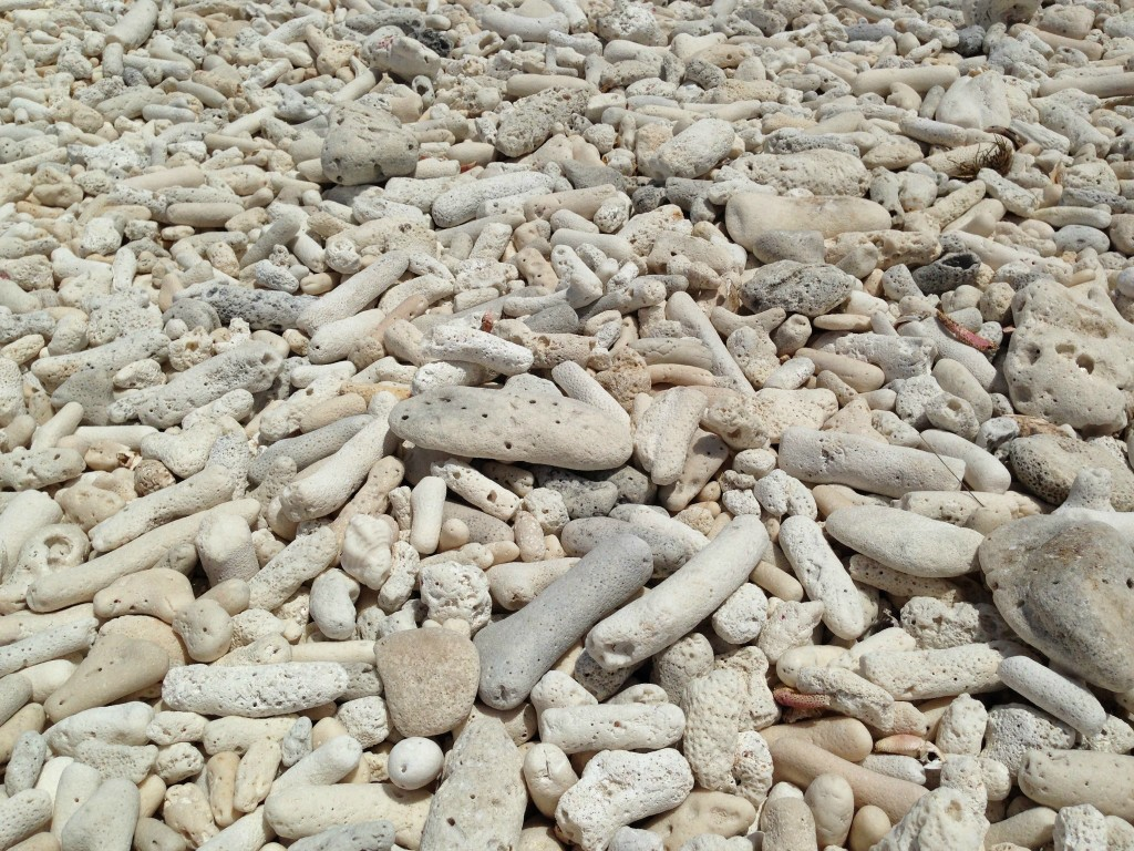 Those aren't rocks on the beach. Dead coral fragments are a common sight on many island shores.
