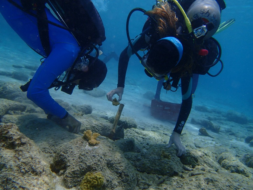 Some corals are attached directly to rocks.