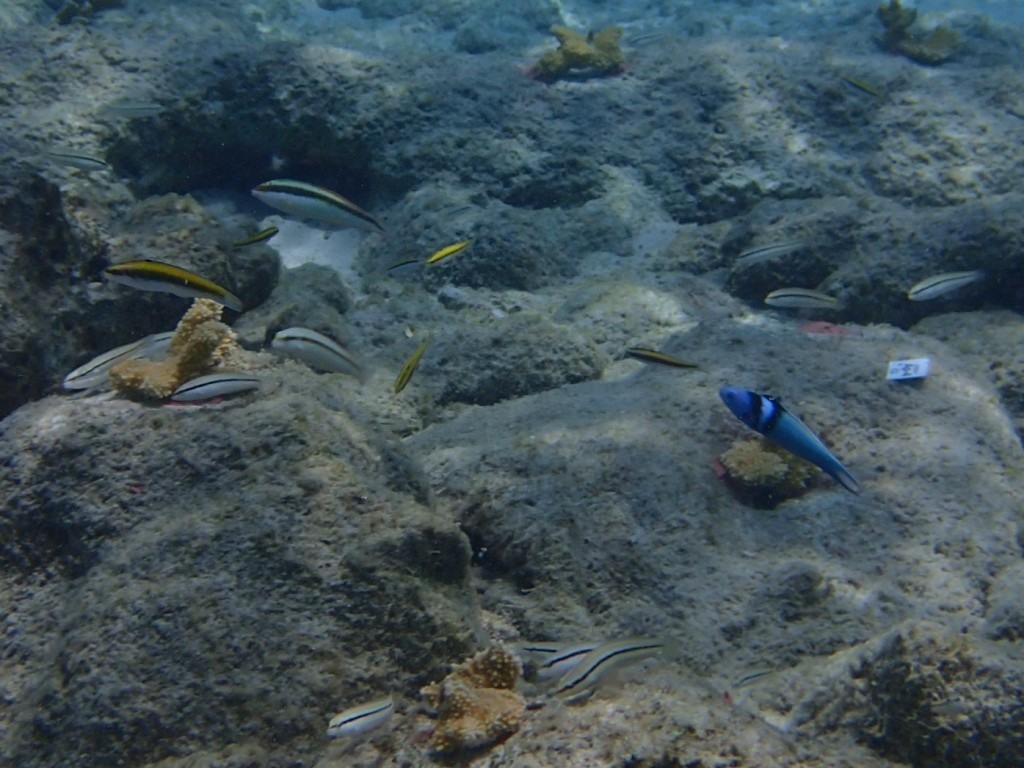 What will this brand new reef look like a year from now?