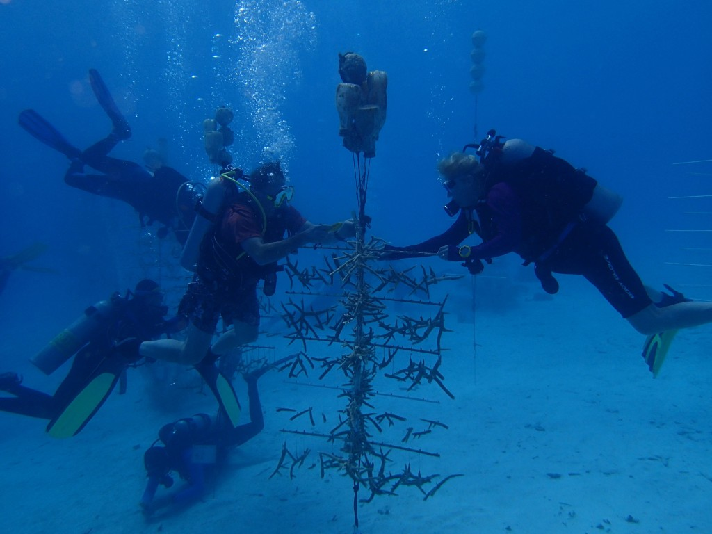 Coral Restoration divers work on one of the nursery trees in Bonaire.