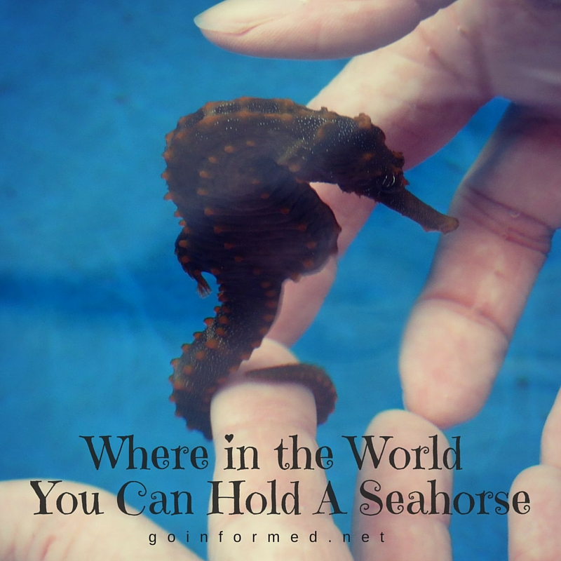 Where in the World You Can Hold A Seahorse