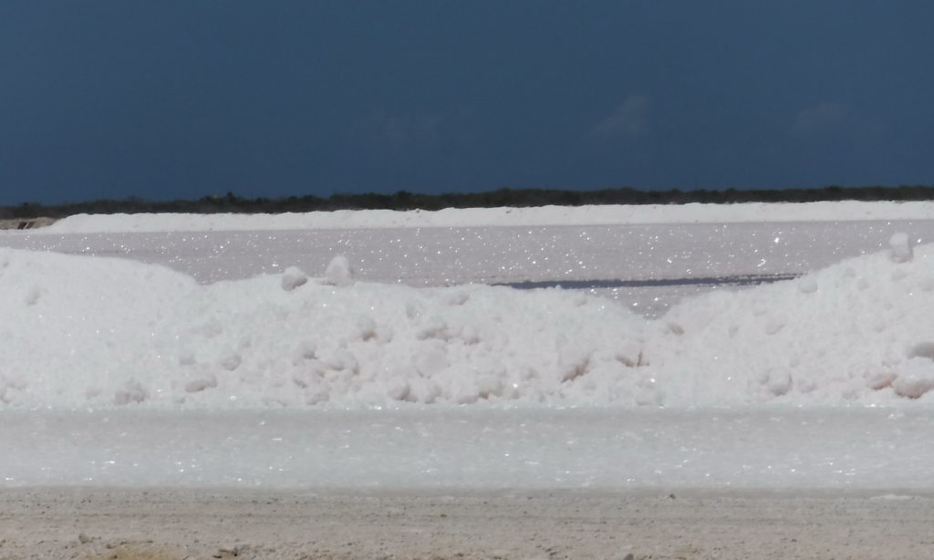 Salt blows to the edge of Bonaire's salt ponds. It looks just like a pile of snow!