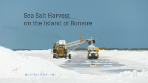 Sea Salt Harvest on the Island of Bonaire